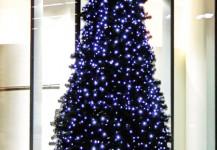 christmas trees 08