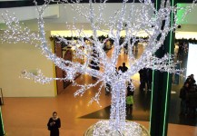christmas trees 12